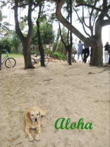 Alohadog